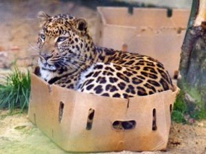 If I fits, I sits. Courtesy of Reddit.