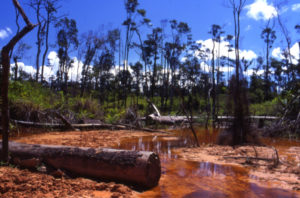 Illegal logging in central Africa
